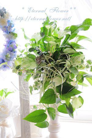 ルーティーブーケ・観葉植物寄せ植え