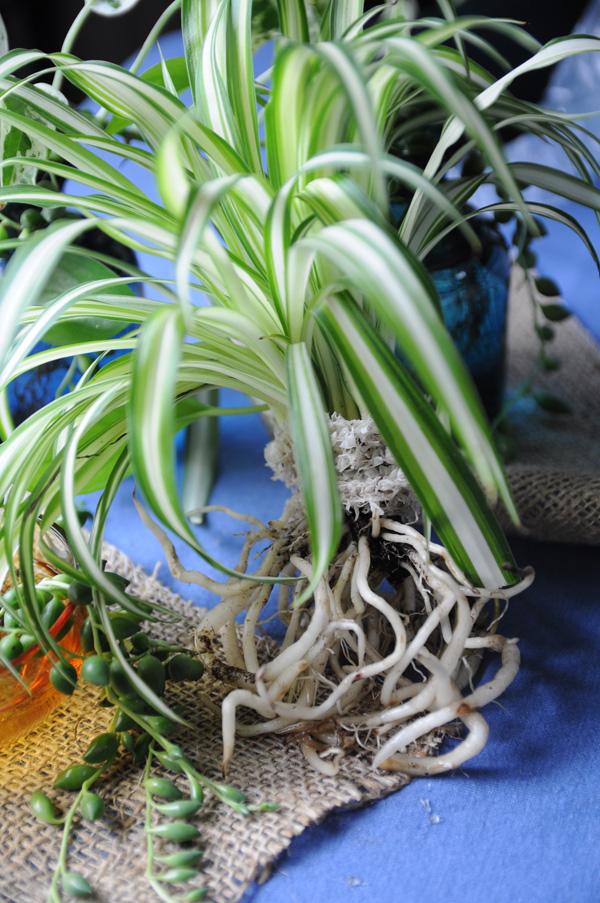 4_botanical